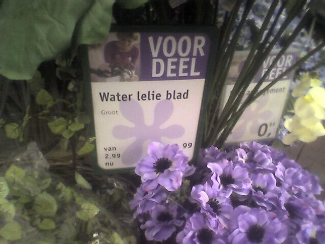 waterlelieblad